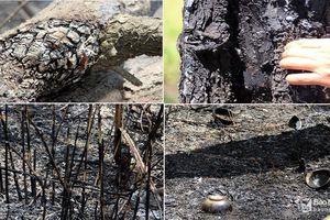 Lửa vẫn âm ỷ sau đám cháy rừng thông ở Nghệ An