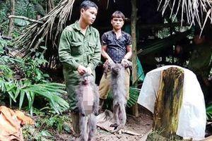 Phạt tù nhóm người giết 2 con voọc xám ở Vườn quốc gia Pù Mát