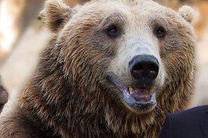 Sự thật bất ngờ về biểu tượng 'gấu Nga': Thế giới có nhầm lẫn người Nga chẳng buồn giải thích