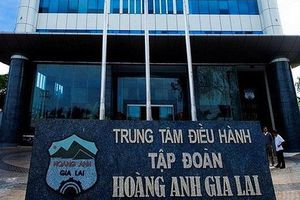 HAG 'trả nợ trước hạn' cho dự án chăn nuôi bò tại Gia Lai?