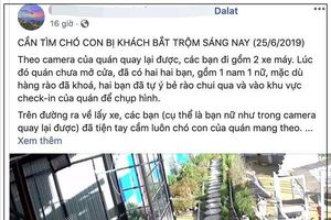 Lại thêm một vụ việc khách du lịch 'vô tư' ẵm chó của quán cafe mang về ở Đà Lạt