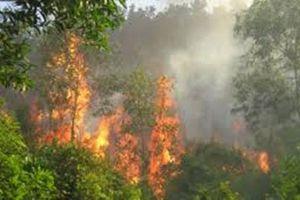 Phú Yên: Cháy lớn rừng phòng hộ ven biển Từ Nham