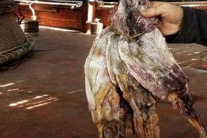 Phương thức xuất khẩu thay đổi, hàng trăm tấn mực khô của ngư dân Quảng Nam 'kẹt đường' sang Trung Quốc