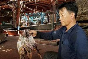 Mực khơi bị tồn ứ ở Quảng Nam: Muốn xuất được phải có tem truy nguồn gốc?