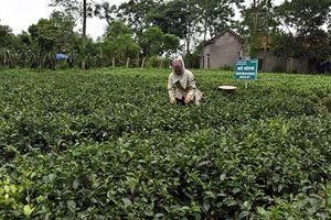 Hà Nội xây dựng thương hiệu để gia tăng giá trị nông sản