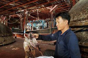 Gần 1.000 tấn mực bị 'ế' do thương lái Trung Quốc thay đổi cách thu mua
