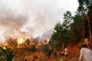 Nắng nóng gay gắt, nguy cơ cháy rừng ở Bắc Bộ và Trung Bộ đang ở mức rất cao