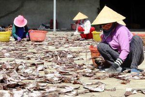 Hàng trăm tấn mực khô nằm cảng vì bí đầu ra