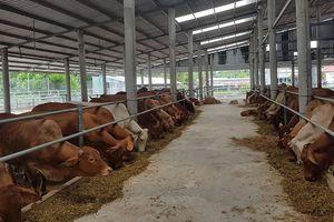 Quy chuẩn về nước thải chăn nuôi: Phải hài hòa lợi ích của doanh nghiệp và BVMT