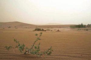Cuộc chiến của TQ ngăn chặn sa mạc lan rộng, chôn vùi cuộc sống