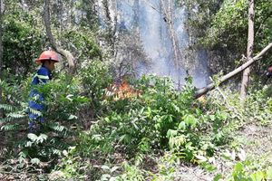 Rừng đang cháy lớn ở Đà Nẵng