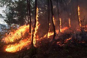 Nghệ An tăng cường các biện pháp cấp bách phòng, chống cháy rừng