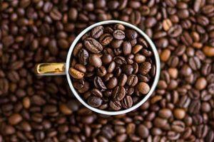 Giá cà phê hôm nay 28/6: Tiếp tục giảm nhẹ thêm 100 đồng/kg