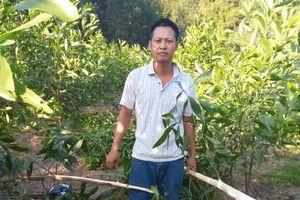 Gần 4.000 cây keo của người dân Nghệ An bị kẻ xấu chặt phá