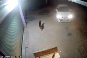 Nhóm người đi xe hơi bắt trộm chó yêu, khiến cư dân mạng phẫn nộ