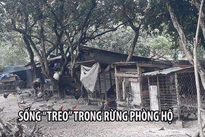 Dân khắc khoải sống 'treo' trong rừng phòng hộ Biên Hòa