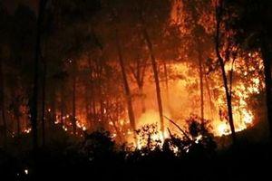 Nghệ An: Một phụ nữ tử vong khi tham gia chữa cháy rừng