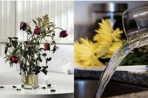6 mẹo 'thần thánh' giúp hồi sinh hoa héo trong 3s, người bán hoa không bao giờ nói cho bạn