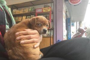 Thực hư câu chuyện chủ quán cafe Đà Lạt kêu gọi tìm chó cưng bị khách du lịch 'cầm nhầm' gây xôn xao