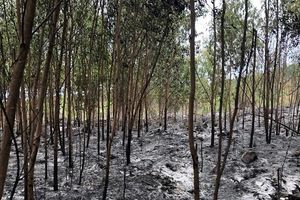 Quảng Ngãi: Đã khống chế được vụ cháy rừng huyện Đức Phổ