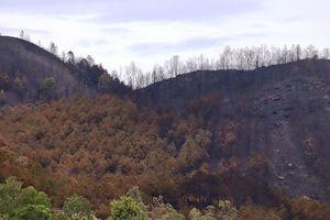 Chùm ảnh: Cận cảnh nơi cháy rừng lớn, người tử vong