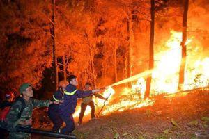 Người đốt rác gây cháy rừng bị xử lý thế nào?