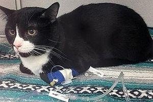 Câu chuyện dở khóc dở cười về chú mèo 'sạch nhất thế giới'