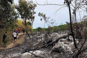 Nhiều héc ta rừng ở Quảng Ngãi bị thiêu rụi trong đêm