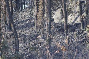 Quảng Bình: Cận cảnh hơn 10 ha rừng thông, keo... bị ngọn lửa thiêu rụi