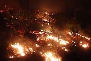 Hà Tĩnh: Bắt lửa từ 2 huyện kế bên, 10ha rừng ở Đức Thọ bị thiêu rụi
