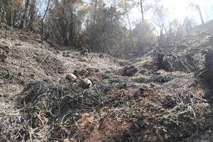 Hà Tĩnh: Hỏa hoạn đã thiêu rụi 200 héc ta rừng