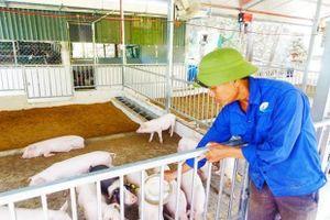 Hiệu quả mô hình chăn nuôi hữu cơ theo công nghệ vi sinh