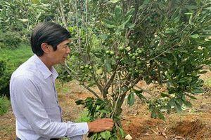 Lâm Đồng: Trang trại 'khổng lồ' trồng cây ra hạt ví như 'hoàng hậu' quả khô