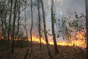 Liên tiếp cháy rừng tại Quảng Nam, Quảng Ngãi gây nhiều thiệt hại