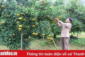 Bản tin Thanh Hóa Online ngày 1-7-2019