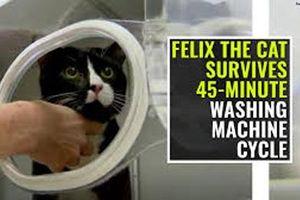 Mèo sống sót sau… 45 phút trong máy giặt