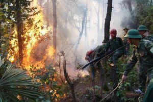 Lao vào biển lửa cứu rừng