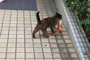 Mèo hoang tự tin bắt cá khiến người xem phát cuồng