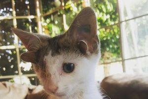 Chú mèo kỳ lạ có 4 tai, 1 mắt, lại rất thu hút
