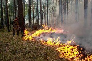 Nga đương đầu với cháy rừng trên 50.000 hecta