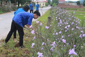 Sóc Sơn: Đoàn thanh niên tích cực hoàn thành 'tuyến đường hoa'