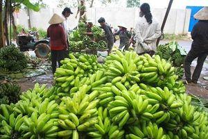 Vì sao các nước cứ khen nông sản Việt ngon nhưng không mua?