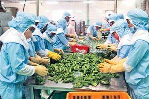 Giải bài toán cạnh tranh cho nông sản Việt Nam trên sân chơi CPTPP