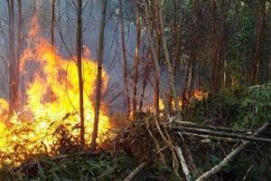 Hàng loạt vụ cháy rừng liên tiếp diễn ra trên địa bàn cả nước