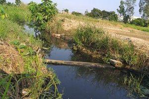 Hải Phòng: Hàng chục hecta ruộng ở huyện An Dương bỏ hoang vì mương thủy lợi ô nhiễm