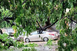Cây xanh ở Sài Gòn ngã đè bẹp dúm ô tô, cả khu vực bị cúp điện