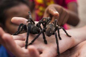 Trải nghiệm ăn nhện độc ngon như cua ở Thái Lan