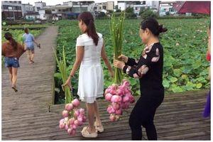 Du khách hái sạch hoa sen, công viên Trung Quốc phải đóng cửa