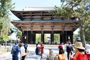 Loạt công ty du lịch ở Hà Nội bị Nhật Bản chặn visa đoàn