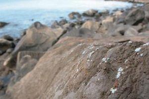 Cảnh báo nguy hiểm: Xuất hiện hình thức ô nhiễm nhựa hoàn toàn mới